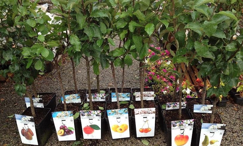 Коли садити саджанці плодових дерев
