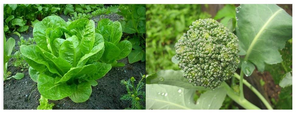 salat_i_brokoli.jpg (165.15 Kb)