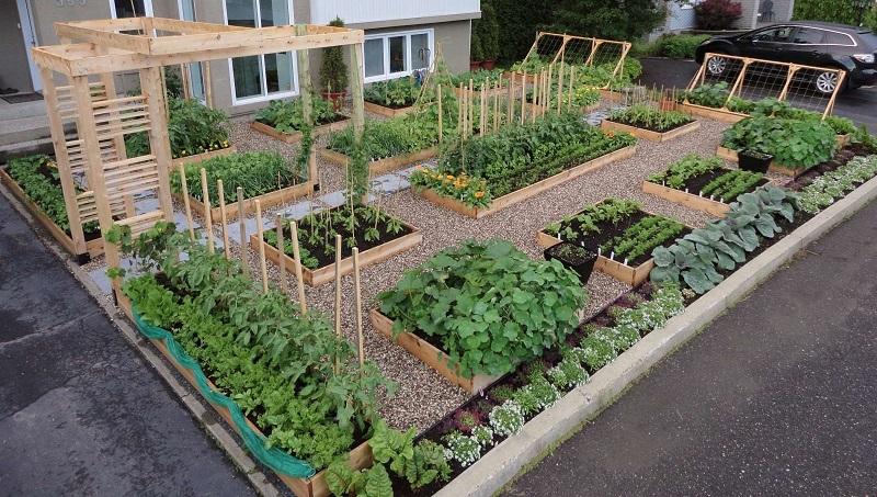 Скільки садити овочів для сім'ї ?