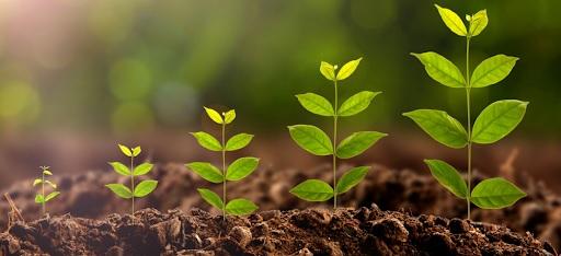 Що таке стимулятори росту рослин: як вони працюють