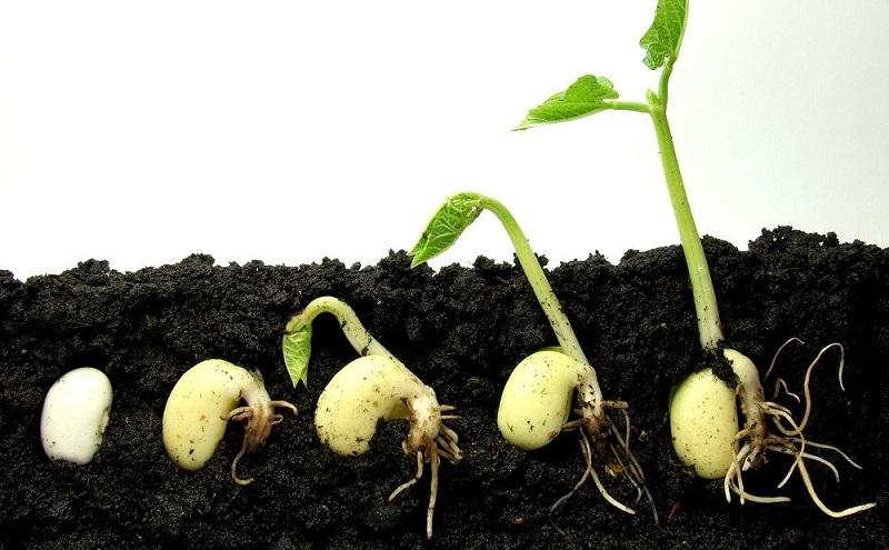 Стратифікація насіння в домашніх умовах