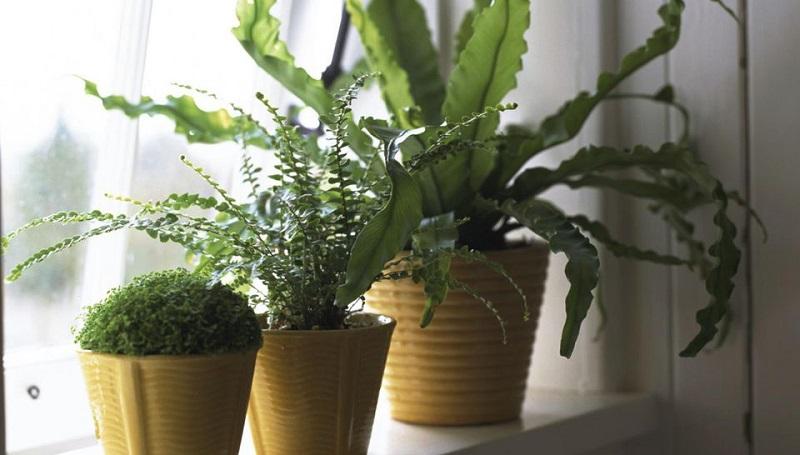 Яскравість світла для кімнатних рослин