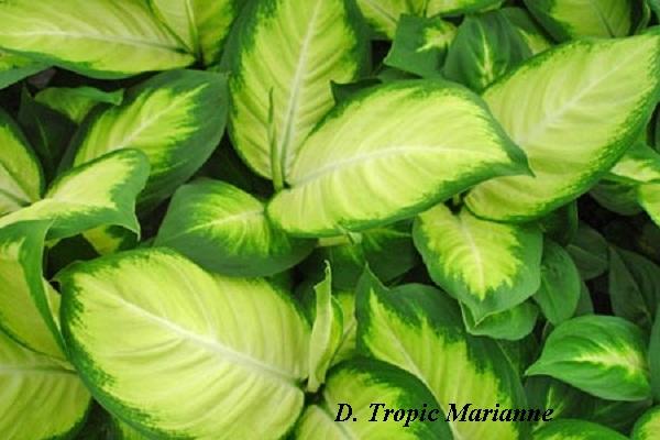 tropic_marianne.jpg (78.55 Kb)
