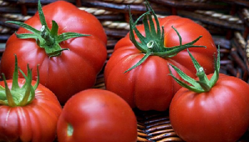 Як виростити великі помідори – поради садівникам