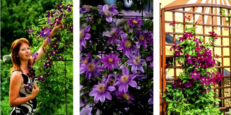 Вертикальні квітники