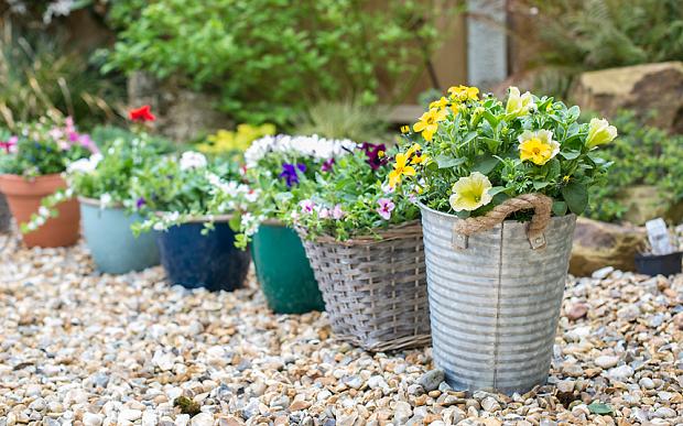 Особливості висаджування рослин в різні контейнери