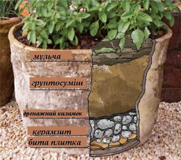 visadzhuvannya_roslin_v_kotreineri.jpg (126.61 Kb)