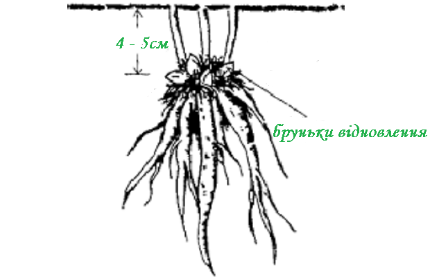 yak_saditi_pion.png (69.73 Kb)