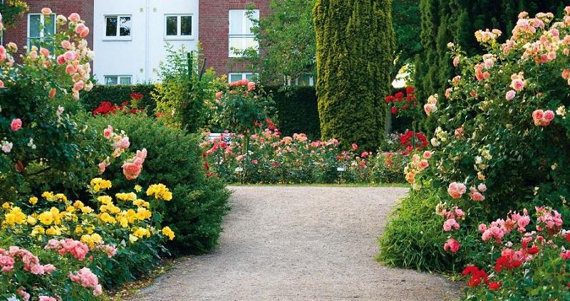 Які квіти посадити біля троянд. Розарій.