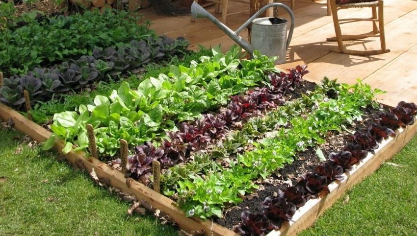 Які овочі посадити в тіні