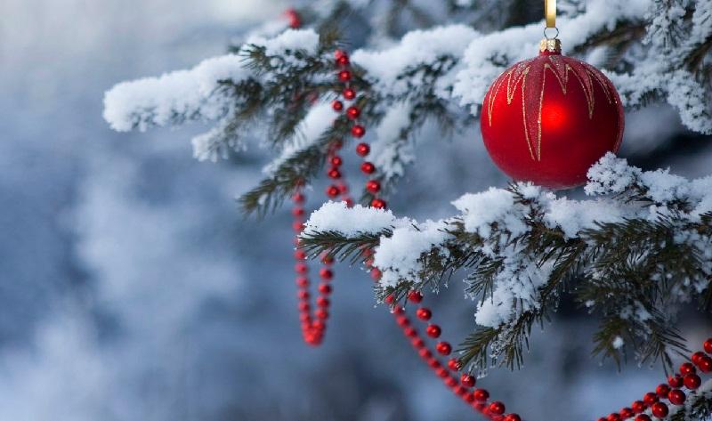 Тренд Нового 2017 року: Ялинки в горщику