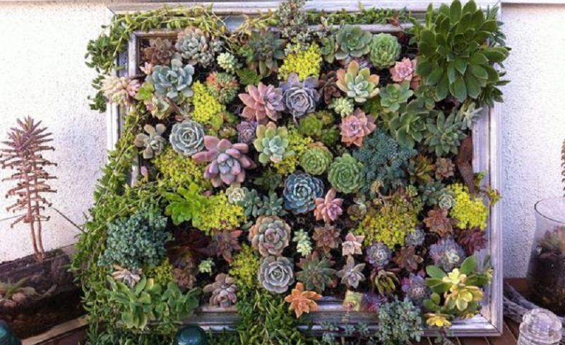 Живі картини із сукулентних рослин